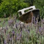 Lavendelstrand